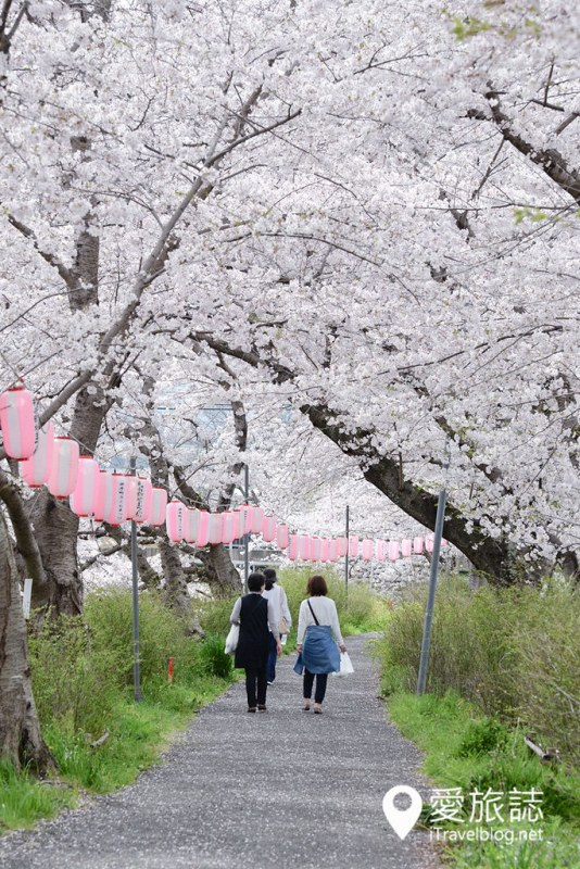《京阪奈赏樱攻略》11天赏樱行程总整理:关西樱花名所集满