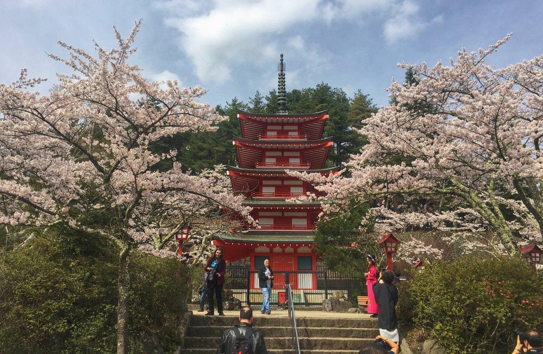 Chureito Pagoda Cherry blossoms