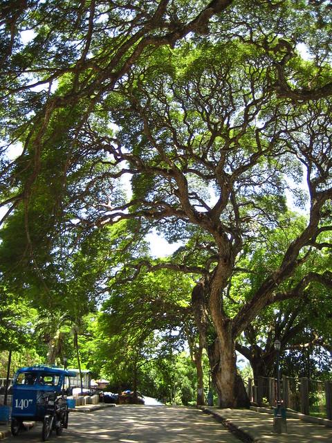 Dumaguete Siquijor 2011 037