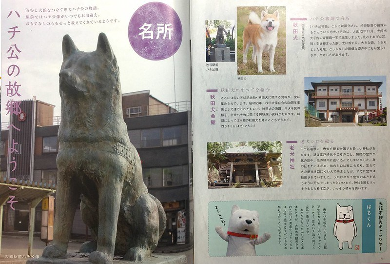 Hachiko relocation to Odate City?