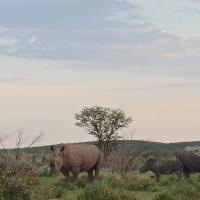Namibia | Etosha