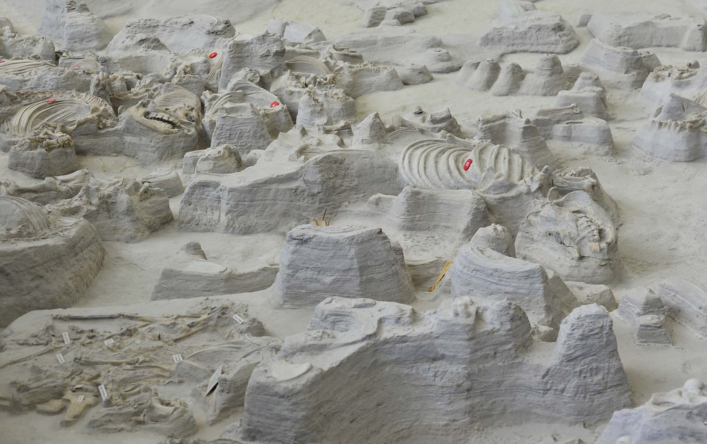 Ashfall fossil beds 5