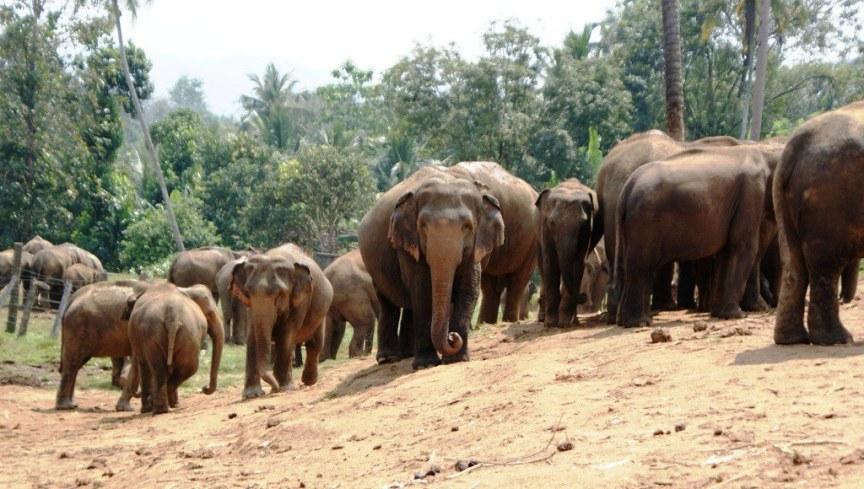 42 Pinnawala Elephant Orphanage