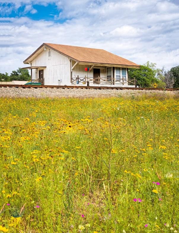 Train Track Wildflowers