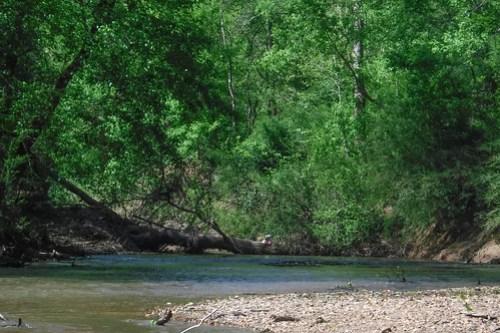 Turkey and Stevens Creeks-101