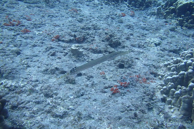 Buceo Isla de Pascua - Hanga Piko - Atariki Diving Center