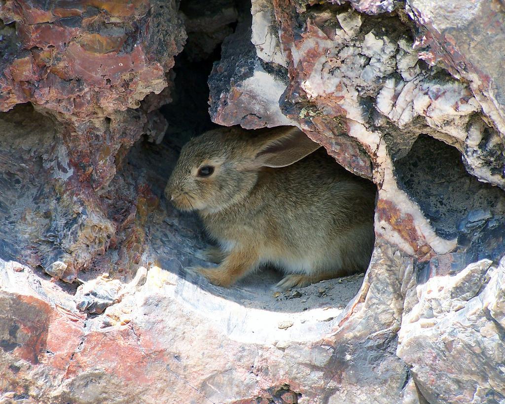 Imagen gratis de un conejo en una cueva
