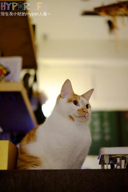 巷子有貓 (32)