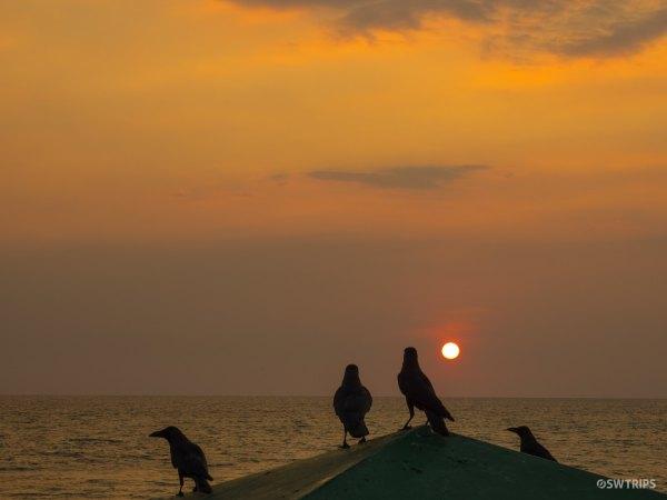 Birds and Sunset - Colombo, Sri Lanka.jpg