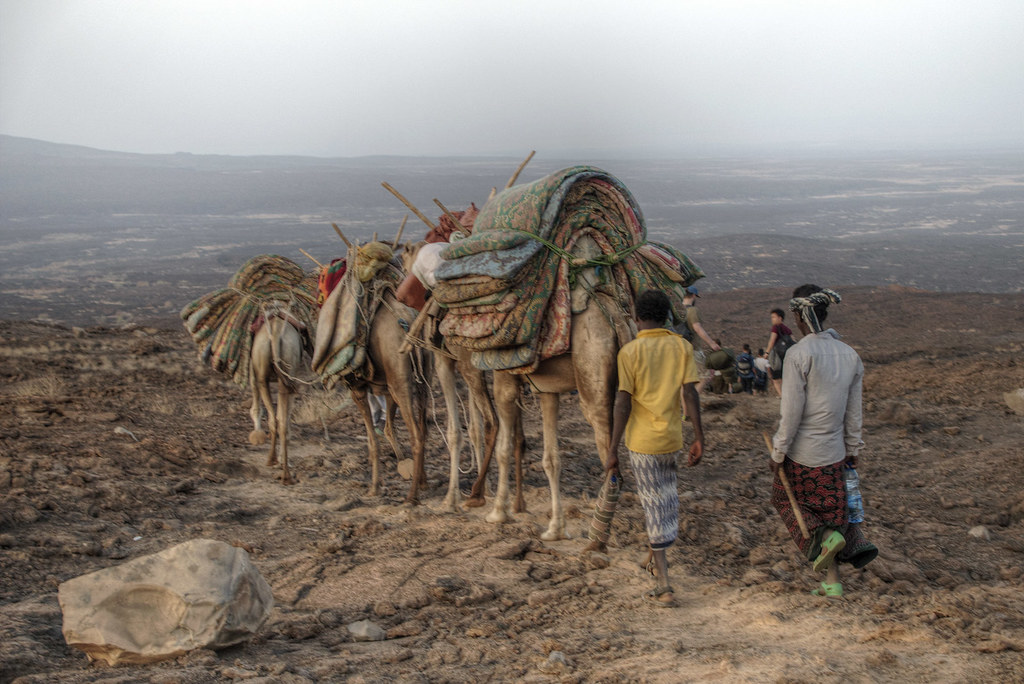 The camel caravan on its way back with our sleeping mats.