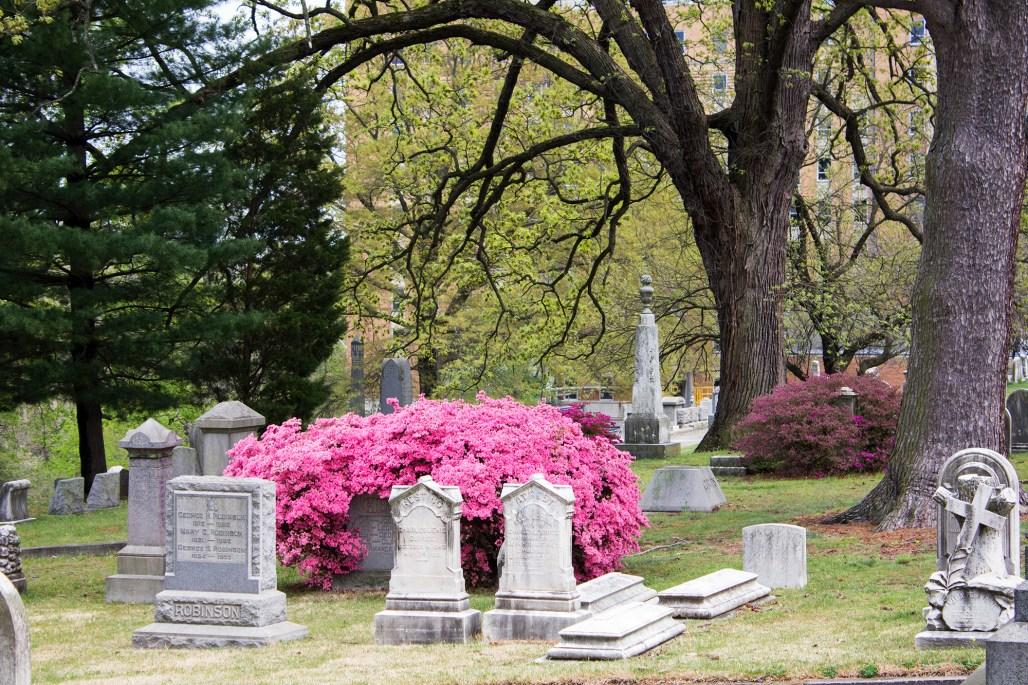 wilmington-brandywine-historical-cemetary-pink-flowers