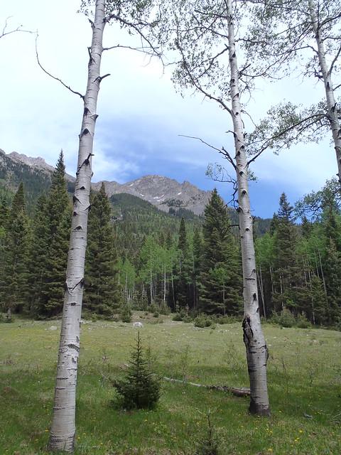 Weminuche Wilderness June 2013 239