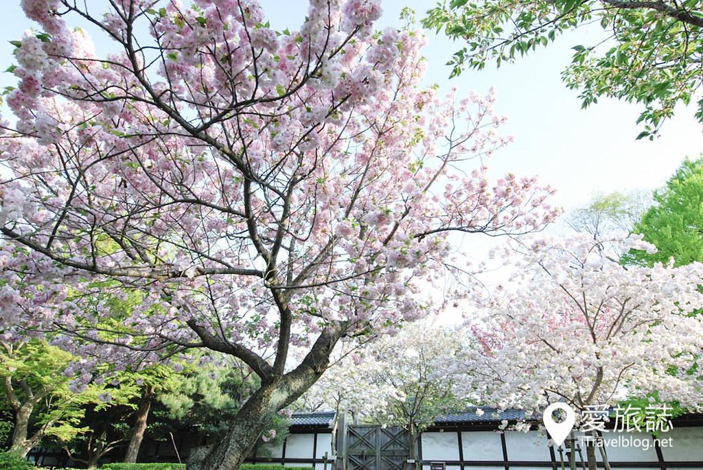 京都赏樱景点 元离宫二条城 36