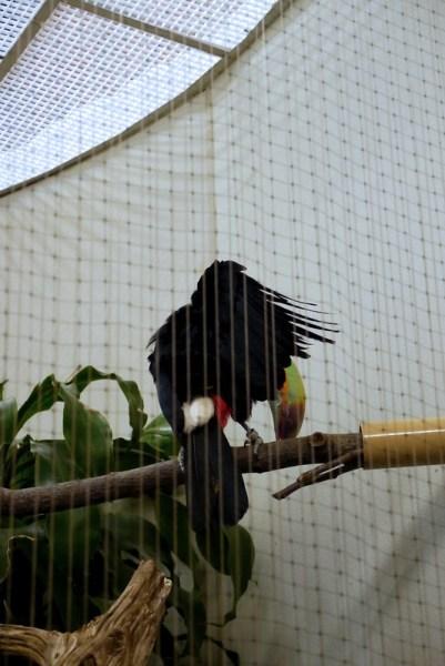 20130304 National Zoological Park, Washington DC 035