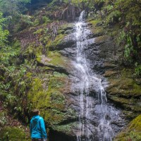Forest of Nisene Marks: Hike to Maple Falls