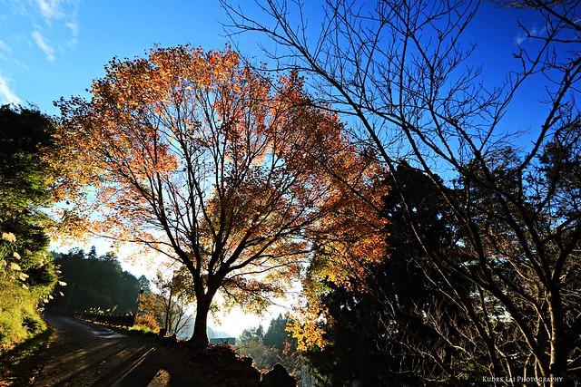 秋天的驚艷正奔放(superise in autumn)