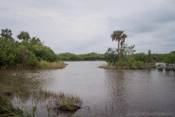 Florida Everglades Grasslands