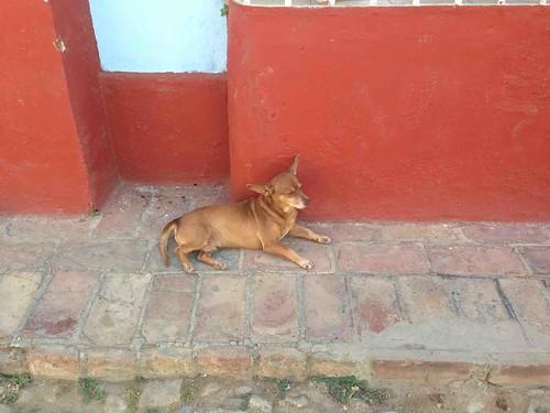 street dog in Cuba