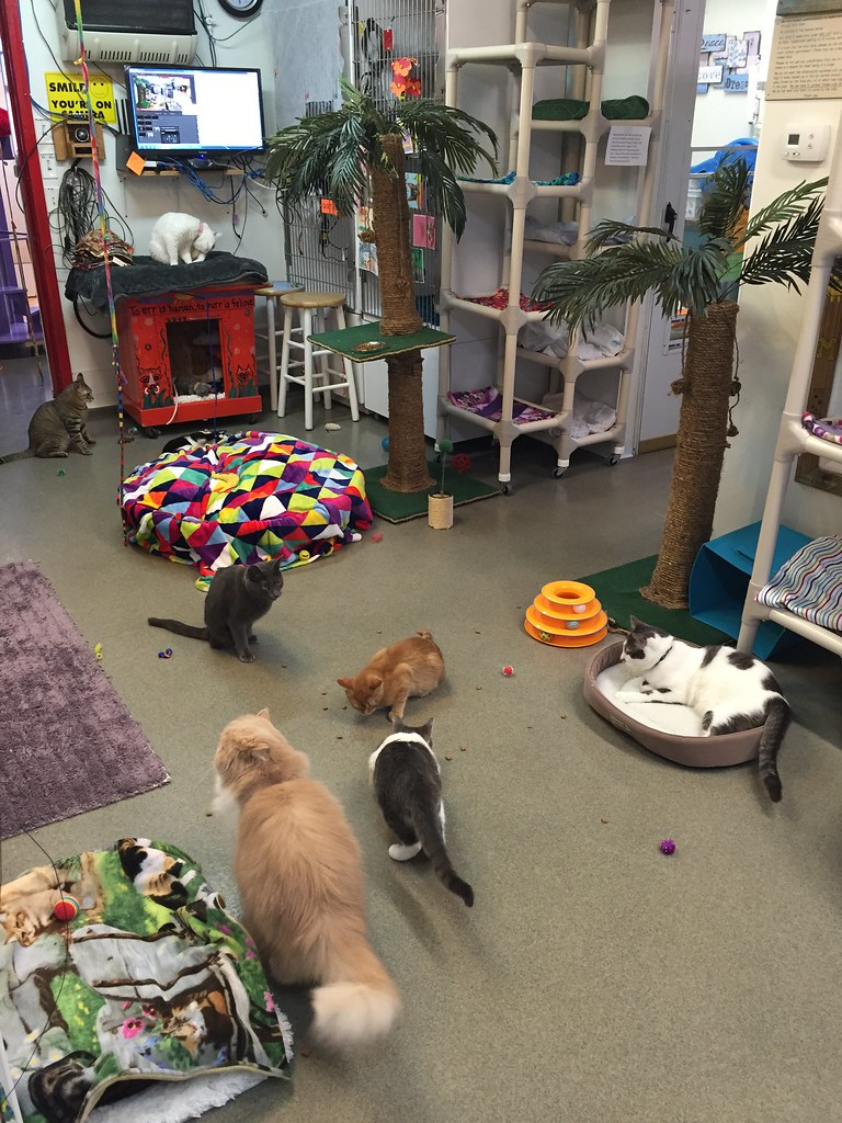 The Main Area Friends of Felines Rescue Center