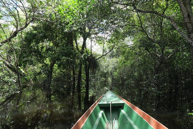 canoe towards submerged forest