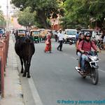 01 Viajefilos en Jaipur 33