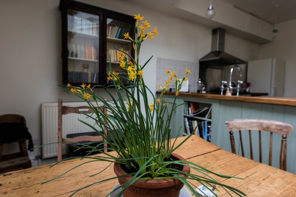 Daffodils in Cambridge Kitchen