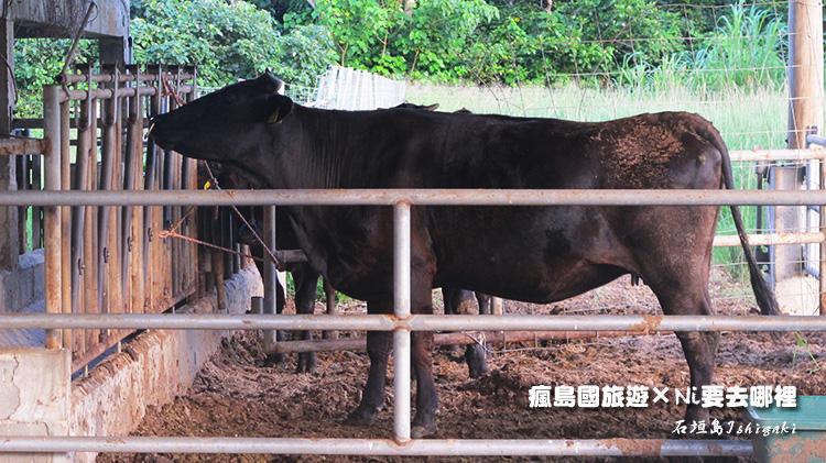 27石垣牛
