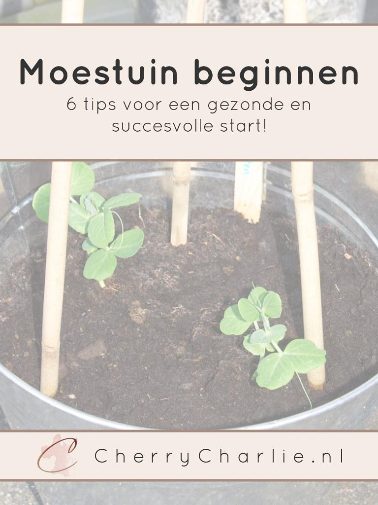Moestuin beginnen: 6 tips voor een gezonde en succesvolle start • CherryCharlie.nl   doperwten   plantjes   tuin   balkontuin