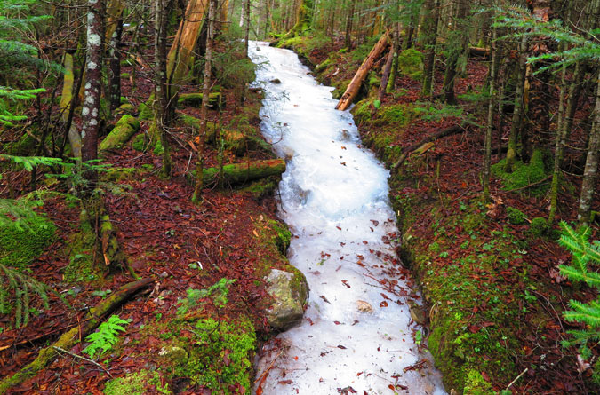 Gale River Trail Icy Trail