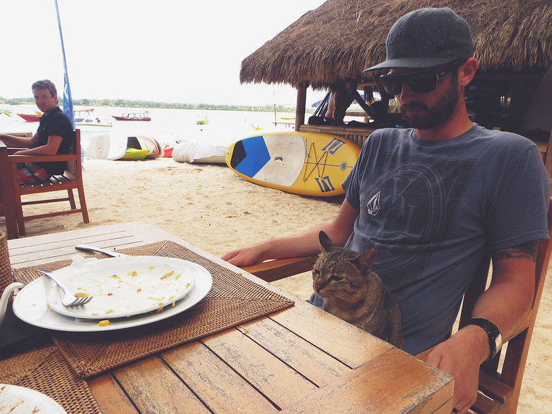 Cat on Gili Trawangan