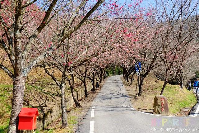 合歡山&武陵農場 (18)