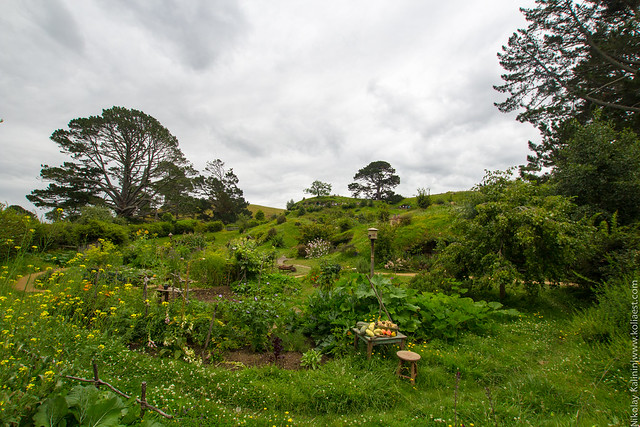 NZ_14-34