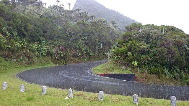 road to col des boeufs in the rain reunion island