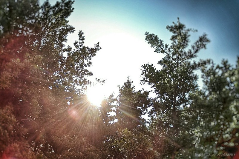 amazing sunshin
