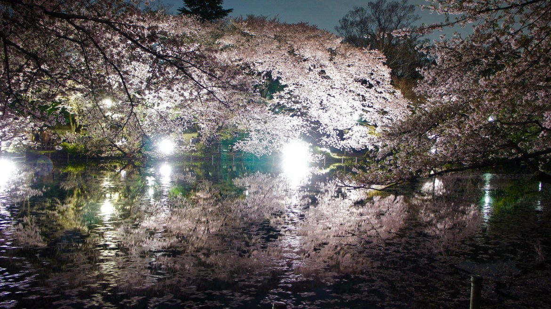 Kichijoji Cherry Blossom Illuminations