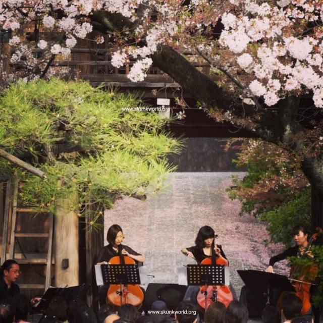 伊藤志宏 3cello variation #伊藤志宏 #平山織江 #井上真那美 #島津由美 #JAPAN #spring #cherryblossom #musician #livemusic #livephotography #nagoya #法応寺