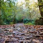 La hojas pisadas