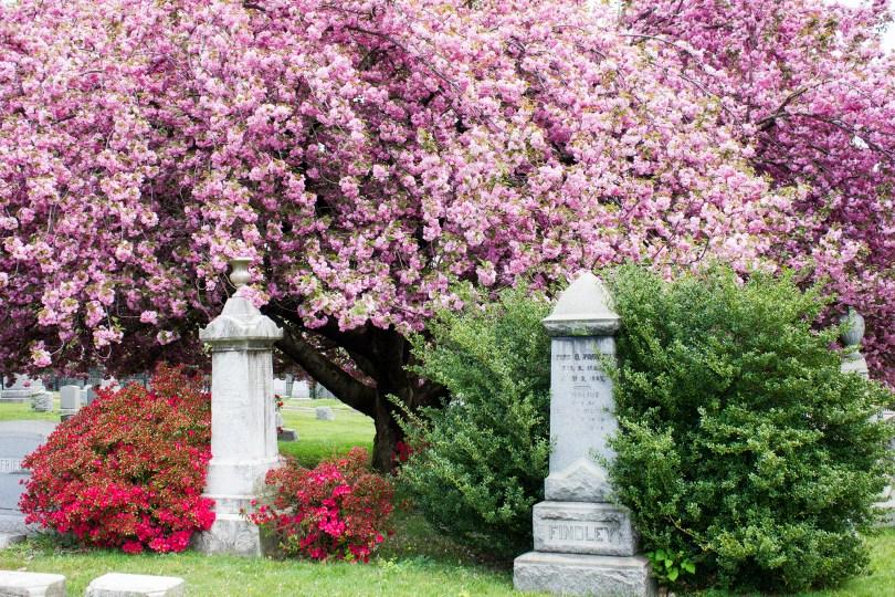 wilmington-brandywine-historical-cemetary-spring