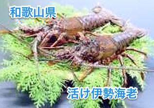 ふるさと納税サイト__ふるさとチョイス____和歌山県東牟婁郡串本町_-_和歌山東漁業協同組合『イセエビ』