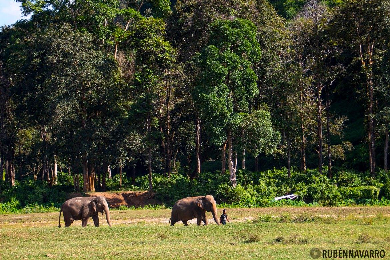 Elephant Nature Park turista responsable