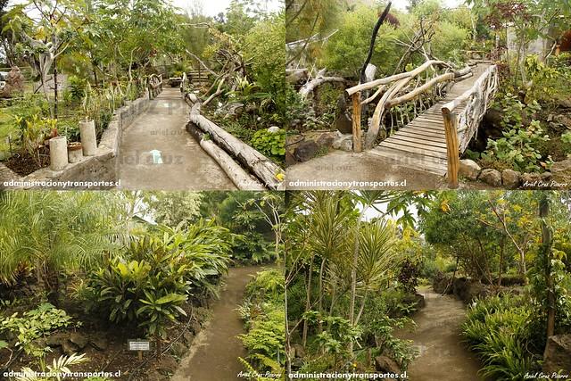 Collage 2 Jardín Botánico Tau Kiani