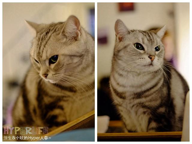 巷子有貓 (14)