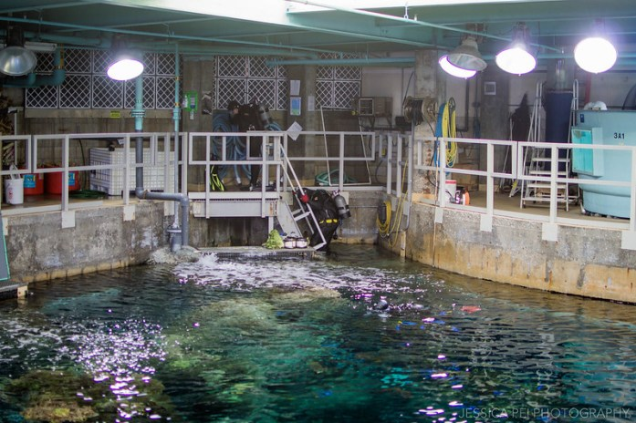 Aquarium of the Pacific Behind the Scenes