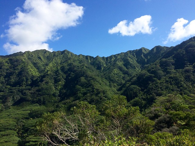 Picture from the Pu'u Pia Trail