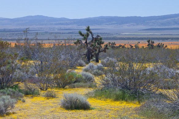 The Mojave Desert in April