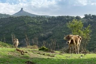 Monte Perda Liana