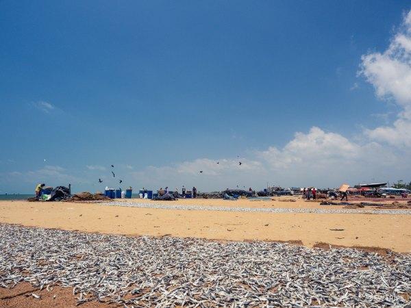 Negombo Fish Market - Negombo, Sri Lanka.jpg