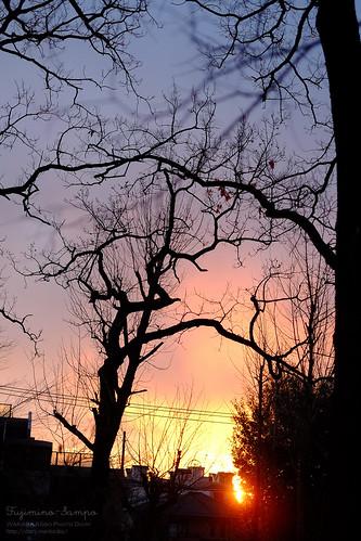 夕陽20160216-d