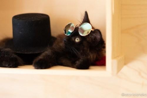 アトリエイエネコ Cat Photographer 42125602234_7ea1b22bf1 1日1猫!おおさかねこ俱楽部 トライアル決定のコロンちゃん♪ 1日1猫!  黒猫 里親様募集中 猫写真 猫カフェ 猫 子猫 大阪 初心者 写真 保護猫カフェ 保護猫 ニャンとぴあ スマホ カメラ おおさかねこ倶楽部 Kitten Cute cat