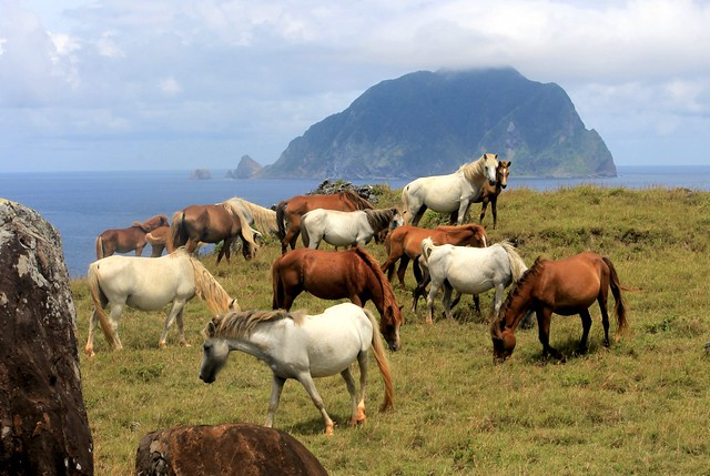 Semi-Wild Horses on Itbayat, Batanes